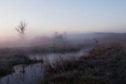 Nebeliger Morgen an der Altmühl